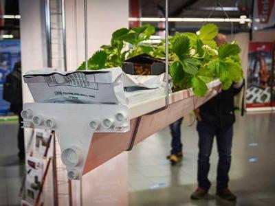 نمایشگاه باغبانی و گل و گیاه فرانسه ۲۰۱۸